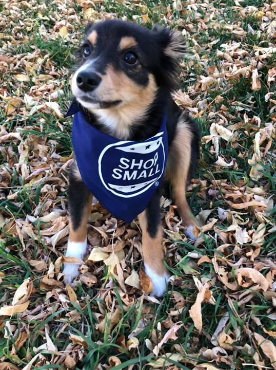 🐾Can you please, shop small this holiday season! 🐾  You can grab Small Business Saturday swag from the Chamber starting this week! Get some fun bandanas like the pup is sporting or we have posters, pendants, stickers, pens, bags, welcome mats, balloons, and more!  💻 Also, you can personalize website, social media, and store signs at  -->https://www.americanexpress.com/us/small-business/shop-small/studio?linknav=us-loy-shopsmallstudio-startcreating.  📱 And check out this article on how to engage customers through social media for the shopping season  --> https://www.americanexpress.com/us/small-business/shop-small/article/how-social-media-can-help-shape-small-business-saturday-success?linknav=us-loy-shopsmallstudio-SBSHowSoci-4